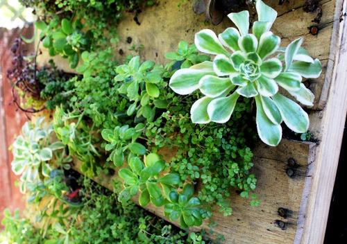 Зимний сад в квартире - вертикальный сад (1)