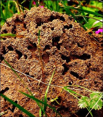 Методы борьбы с муравьями - как вывести муравьев (2)