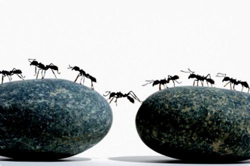 Методы борьбы с муравьями - как вывести муравьев (3)