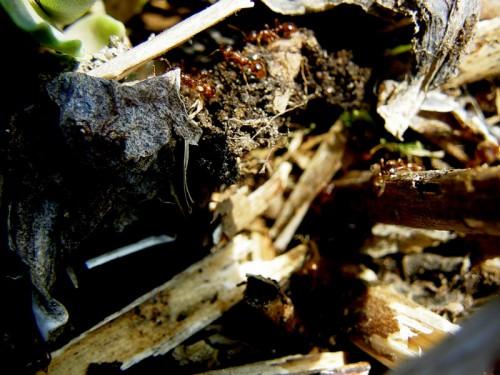 Методы борьбы с муравьями - как вывести муравьев (5)