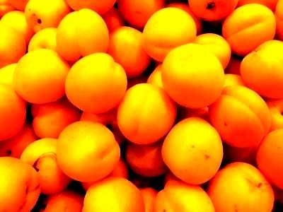 Посадка абрикоса - уход за деревом (1)