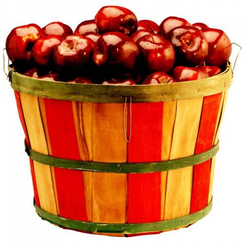 Яблоня уход - выращивание яблони (6)