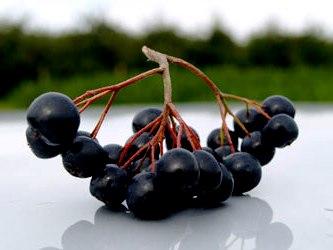 Черноплодная рябина   (2)