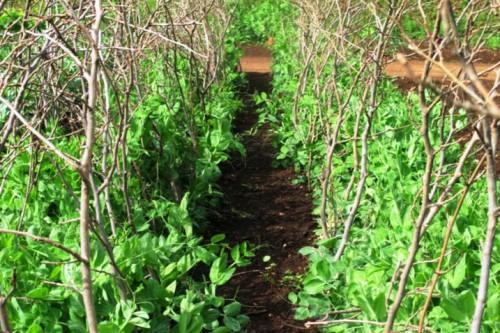 Овощи на даче - огород на даче (7)
