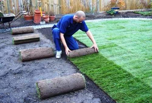 Как выращивать газонную траву (2)