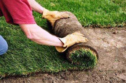 Как выращивать газонную траву (4)