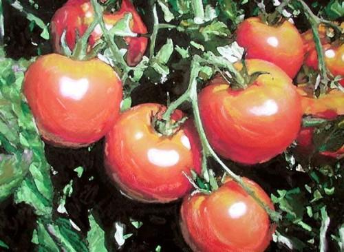 Как вырастить помидоры - польза помидор (3)