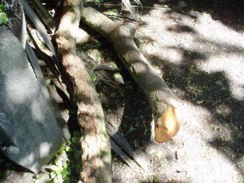 Как сделать клумбу на даче - цветник своими руками (3)