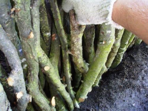 Как сделать клумбу на даче - цветник своими руками (24)