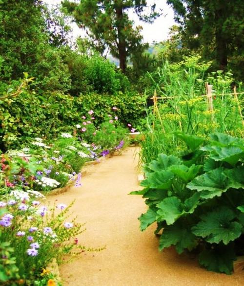 Советы дачникам - наш сад и огород (7)