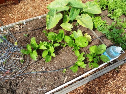 Украшение садового участка своими руками - оформление дачи своими руками (11)