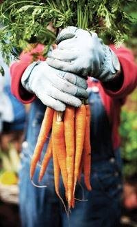 Уход за морковью (1)