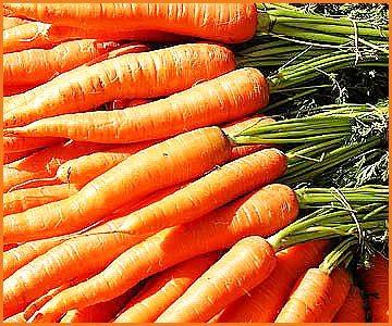 Чем полезна морковь- лучшие сорта моркови - выращивание моркови (3)