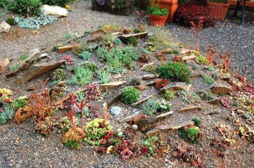 Альпинарий фото - растения для альпинария (9)
