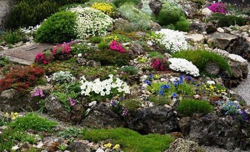Альпинарий фото - растения для альпинария (19)