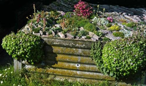 Альпинарий фото - растения для альпинария (29)
