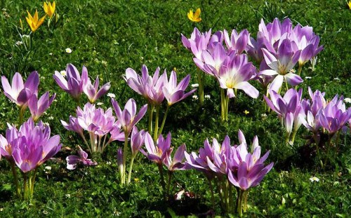 Альпинарий фото - растения для альпинария (41)