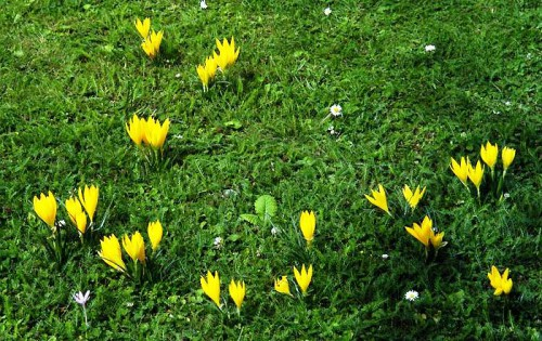 Альпинарий фото - растения для альпинария (43)