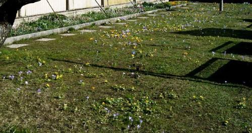 Альпинарий фото - растения для альпинария (45)