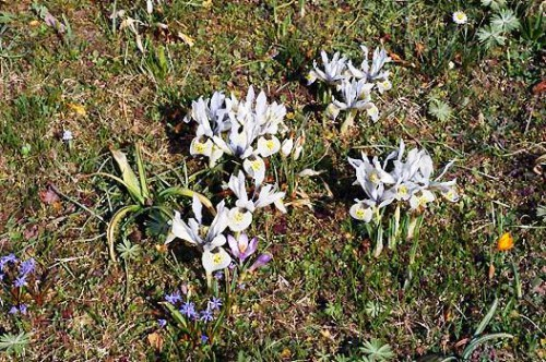 Альпинарий фото - растения для альпинария (48)