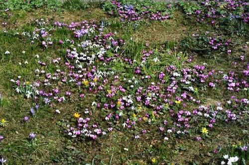 Альпинарий фото - растения для альпинария (49)