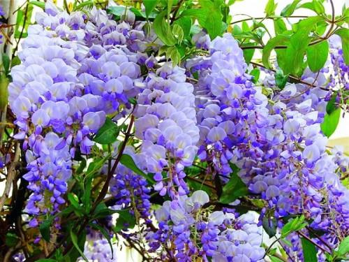 вьющиеся цветы (2)