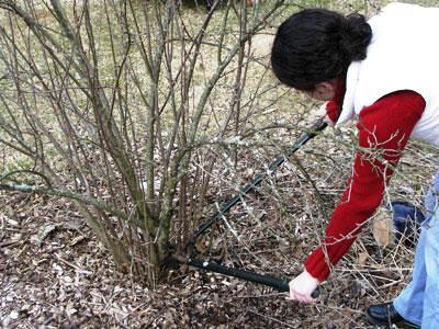 Как правильно обрезать деревья - обрезание плодовых деревьев (4)