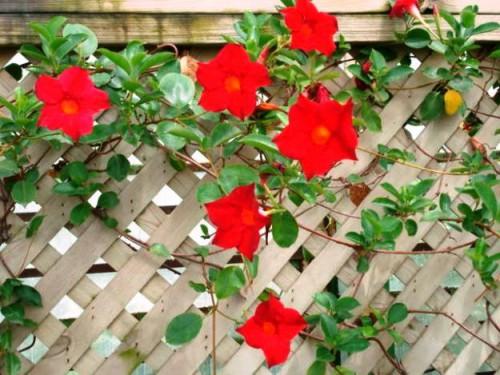 вьющиеся цветы (4)