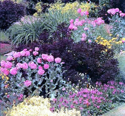 Палисадник своими руками - фото как украсить сад  (12)