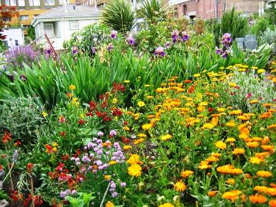 Палисадник своими руками - фото как украсить сад  (14)