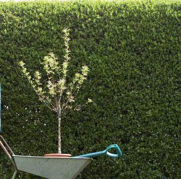 Палисадник своими руками - фото как украсить сад  (17)
