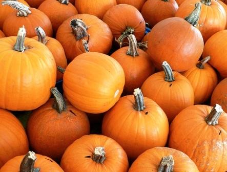 Сладкие сорта тыквы - полезные свойства тыквы (4)