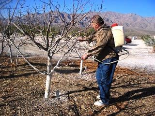 Чем белят деревья - побелка для деревьев (5)