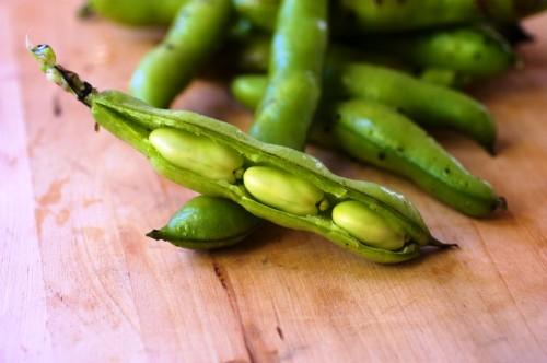 Чем полезна фасоль - как выращивать фасоль (5)