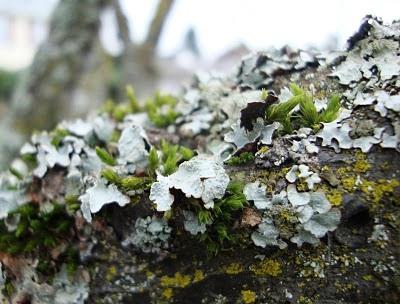 Болезни плодовых деревьев - борьба с мхом (5)