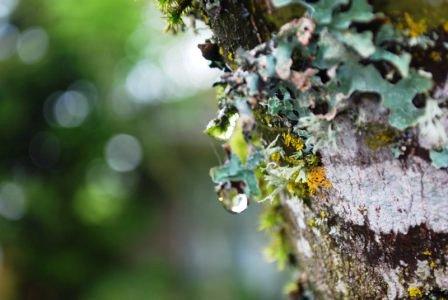 Болезни плодовых деревьев - борьба с мхом (15)