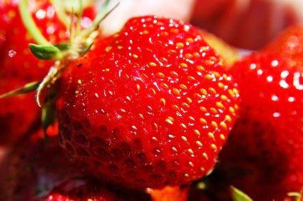 Выращивание земляники дома - посадка земляники садовой (5)