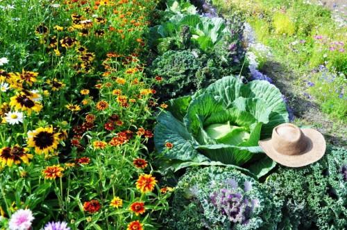 Выращивание овощей в теплицах - как вырастить капусту и помидоры (8)