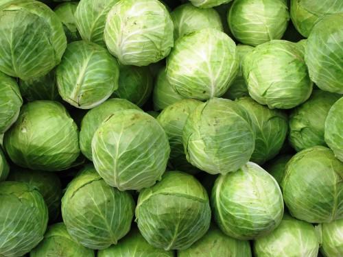 Выращивание овощей в теплицах - как вырастить капусту и помидоры (9)