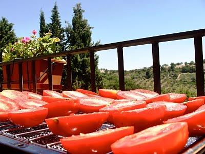 Выращивание овощей в теплицах - как вырастить капусту и помидоры (11)