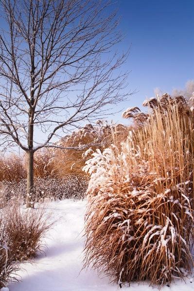 Фитонциды растений - защита сада (10)