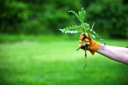 Борьба с сорняками - избавиться от сорняков (3)