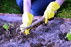 Борьба с сорняками - избавиться от сорняков (4)
