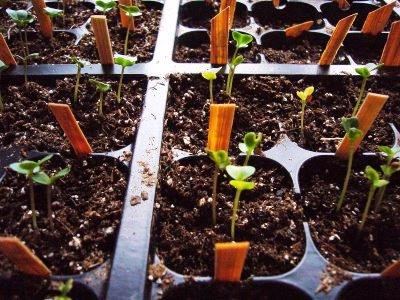 Как выбрать семена - семена для посадки (3)