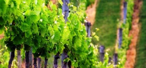 Вертикальное озеленение сада - озеленение территории (5)