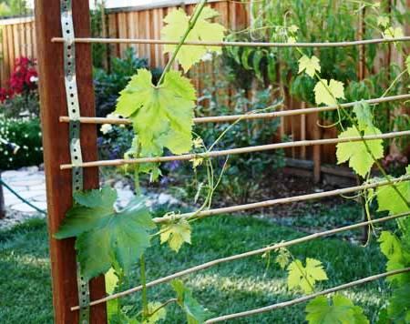 Вертикальное озеленение сада - озеленение территории (9)