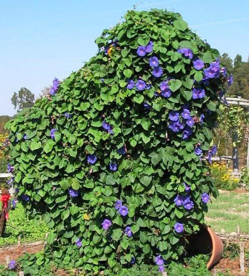 Вертикальное озеленение сада - озеленение территории (14)