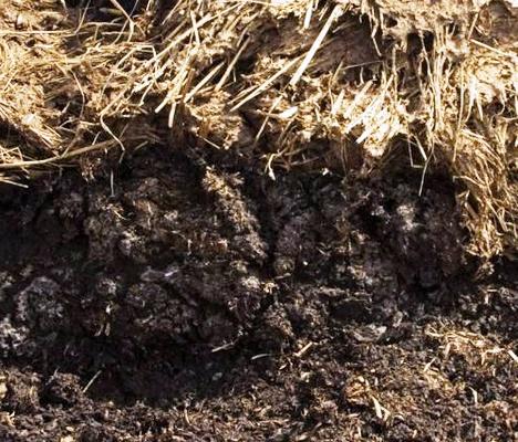 Органические удобрения - хранение навоза (3)