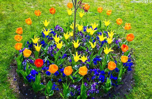 Оформление цветника - цветник на даче своими руками (1)