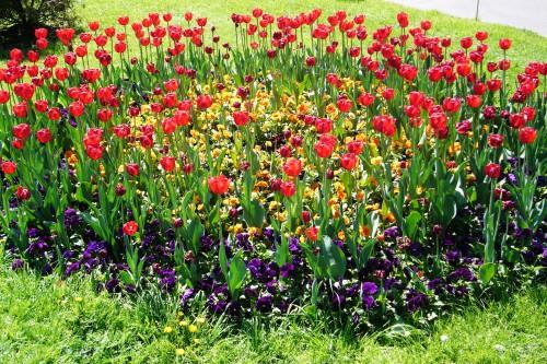 Оформление цветника - цветник на даче своими руками (2)